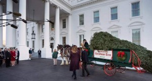US-POLITICS-TRUMP-CHRISTMAS TREE