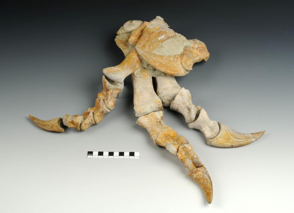 Plateoszaurusz láb_NHM Wien_Alice Schumacher