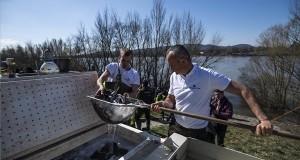 Halőrök kecsegét (Acipenser ruthenus) telepítenek a Dunába a Fővárosi Csatornázási Művek Zrt. (FCSM) Észak-pesti Szennyvíztisztító Telepe melletti Duna-parton 2019. március 20-án. A halak napja és víz világnapja alkalmából a Fővárosi Horgászegyesületek Szövetsége és az FCSM féltonnányi kecsegét telepített a Dunába. MTI/Mónus Márton