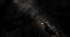 Fekete - Kiskunsági Nemzeti Park ~ Marchhart Pál
